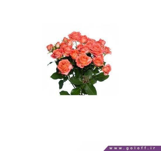 خرید اینترنتی شاخه گل - عکس تک شاخه گل | گل آف