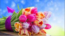 گل فروشی کیانی