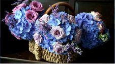 گل فروشی کاملیا   خیابان وحید