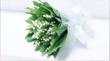 گل فروشی کاکتوس