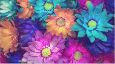 گل فروشی لیندا