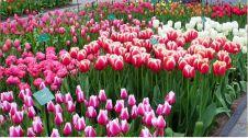 گل فروشی گلزار