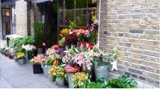 گل فروشی پردیس