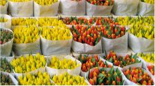 گل فروشی دشت گل