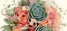 گل فروشی لوتوس