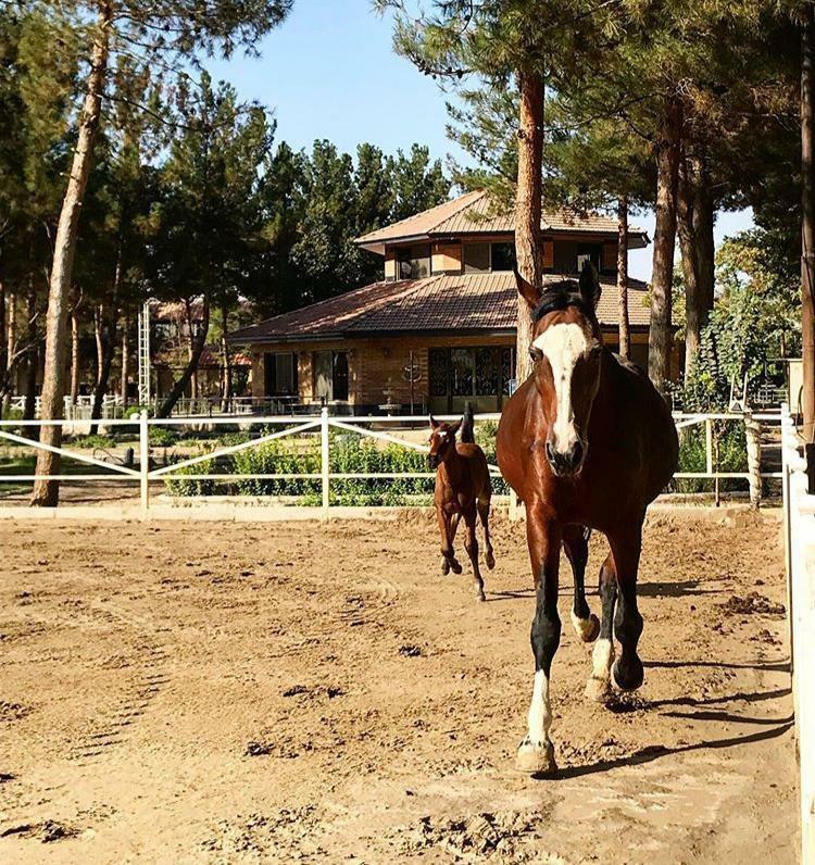 %20 تخفیف آموزش مبتدی اسب سواری