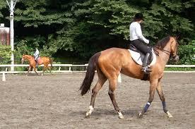 %۲۰ تخفیف اسب سواری( مقدماتی)